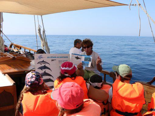 Classe de mer pour enfants par SOS Grand Bleu